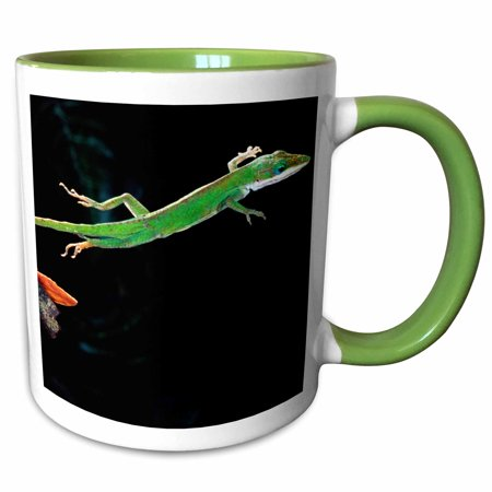 3dRose Carolina Anole, American Chameleon, lizard - NA02 DNO0260 - David Northcott - Two Tone Green Mug, -