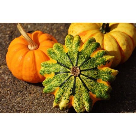 LAMINATED POSTER Decorative Squashes Nature Autumn Pumpkins Poster Print 11 x 17 ()