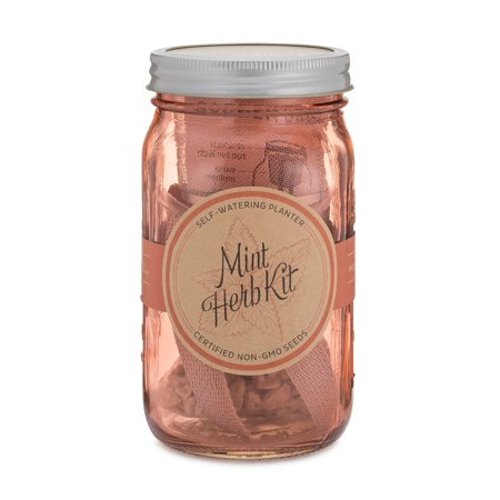Modern Sprout Mix-Colored Mason Jar Self-Watering Organic ...