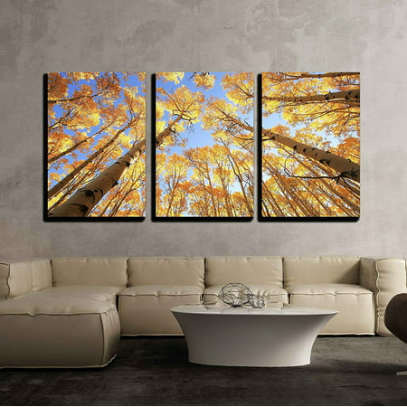 wall26 - Aspen Trees with Fall Color - Canvas Art Wall Decor - 16