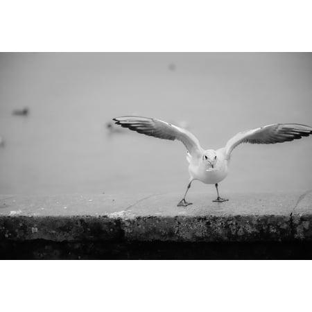 Framed Art For Your Wall White Bird Flight Lake Switzerland Beach ...