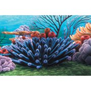 Penn Plax Finding Nemo Coral Reef 20 gal. Background