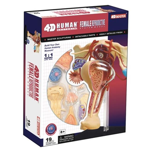 Tedco Toys 26062 4D Human Anatomy Female Reproductive System