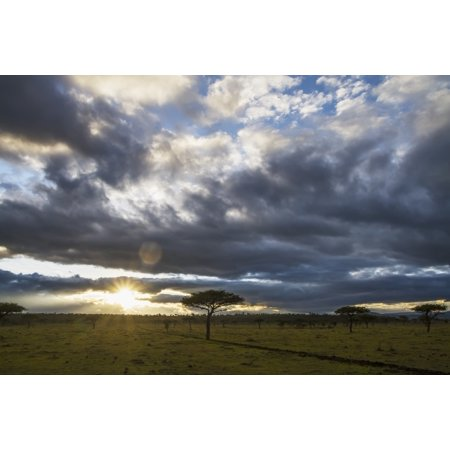 Posterazzi Acacia trees at sunrise Mara Naboisho Conservancy Kenya Canvas Art - Peter Langer  Design Pics (38 x 24)