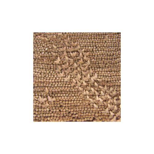 Candice Olson Rugs Butterfly Driftwood Area Rug
