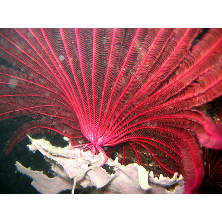 Framed Art for Your Wall Ocean Reef Sea Coral Underwater Water Red Crinoid 10x13 Frame