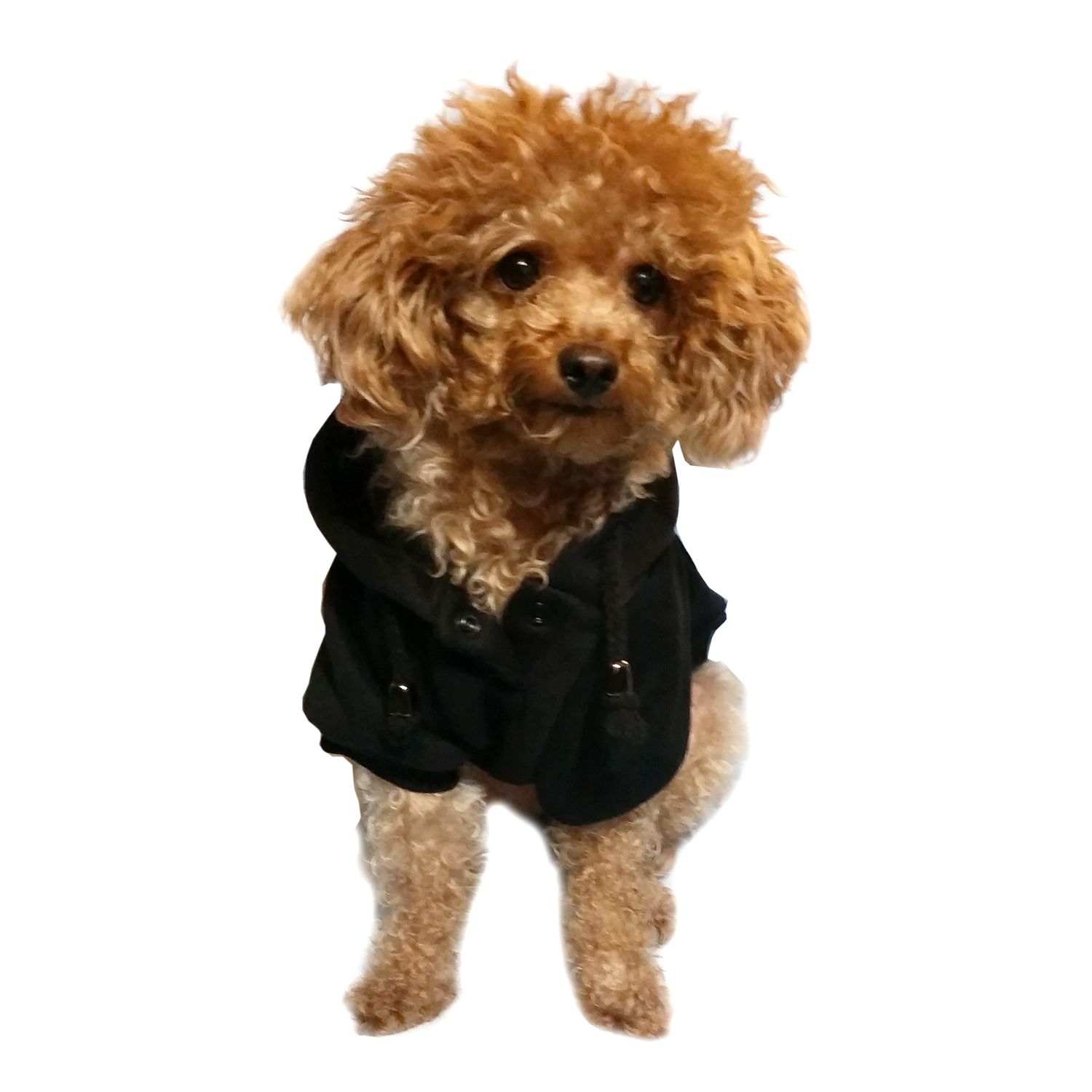 Black Dog Apparel Cold Weather Coat Pullover Sweatshirt For Dog Puppy - Small