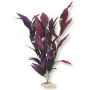 Blue Ribbon Plant - African Sword W/Flowers Medium Plum