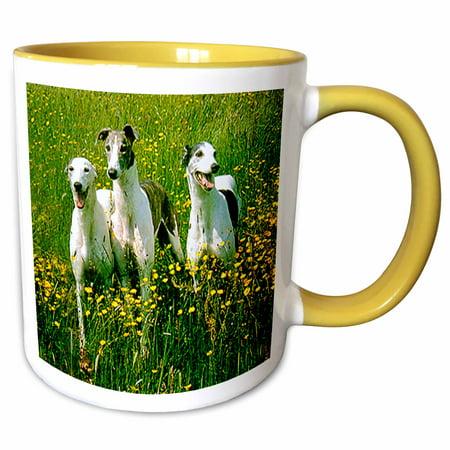 3dRose Greyhound - Two Tone Yellow Mug, 11-ounce