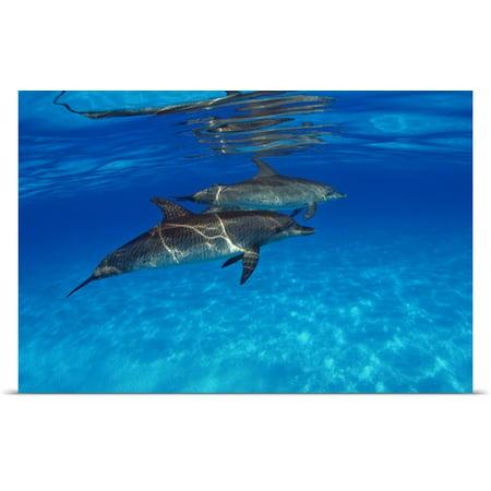 Great Big Canvas Dave Fleetham Poster Print Entitled Caribbean  Bahamas  Bahama Bank  Two Atlantic Spotted Dolphin