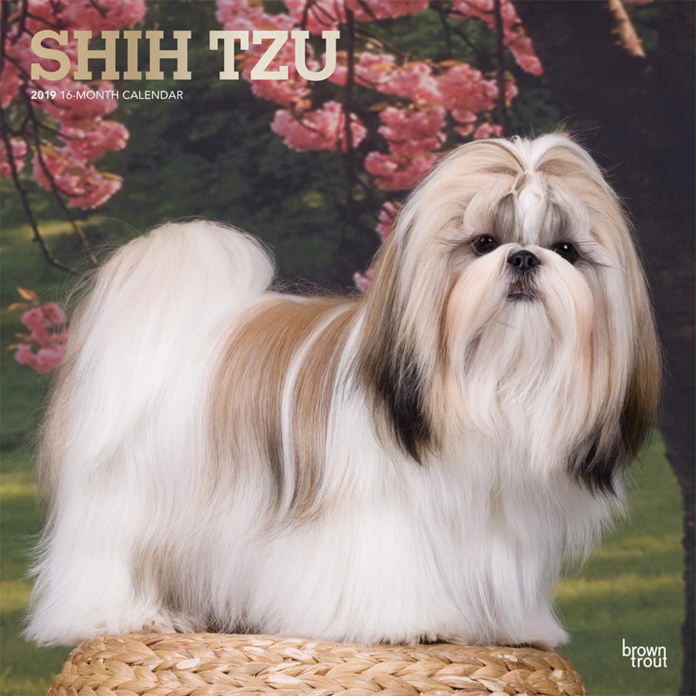 Shih Tzu 2019 Square Foil (Other)