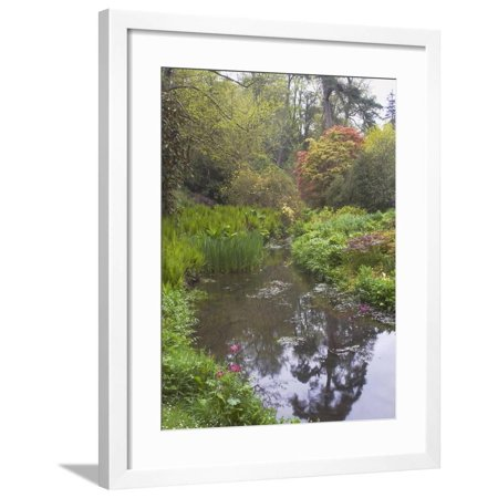Large Pond with Candelabra Primula and Acers in the Spring, Minterne, Dorset Framed Print Wall Art By Phillip Smith ()