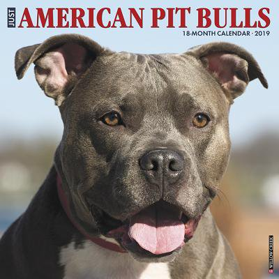Just American Pit Bull Terriers 2019 Wall Calendar (Dog Breed Calendar) (Other)