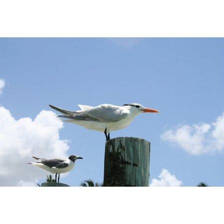 LAMINATED POSTER Water Bird Bill Lake Animal Fly Gull Bird Poster Print 24 x 36