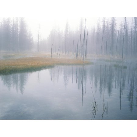 Lodge Pole Pines Along Fire Hole Lake, Yellowstone NP, Wyoming Print Wall Art By Greg Probst (Lake Pipe)