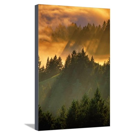Light Fog and Tree Design, Mount Tamalpais, San Francisco, Callifornia Stretched Canvas Print Wall Art By Vincent James