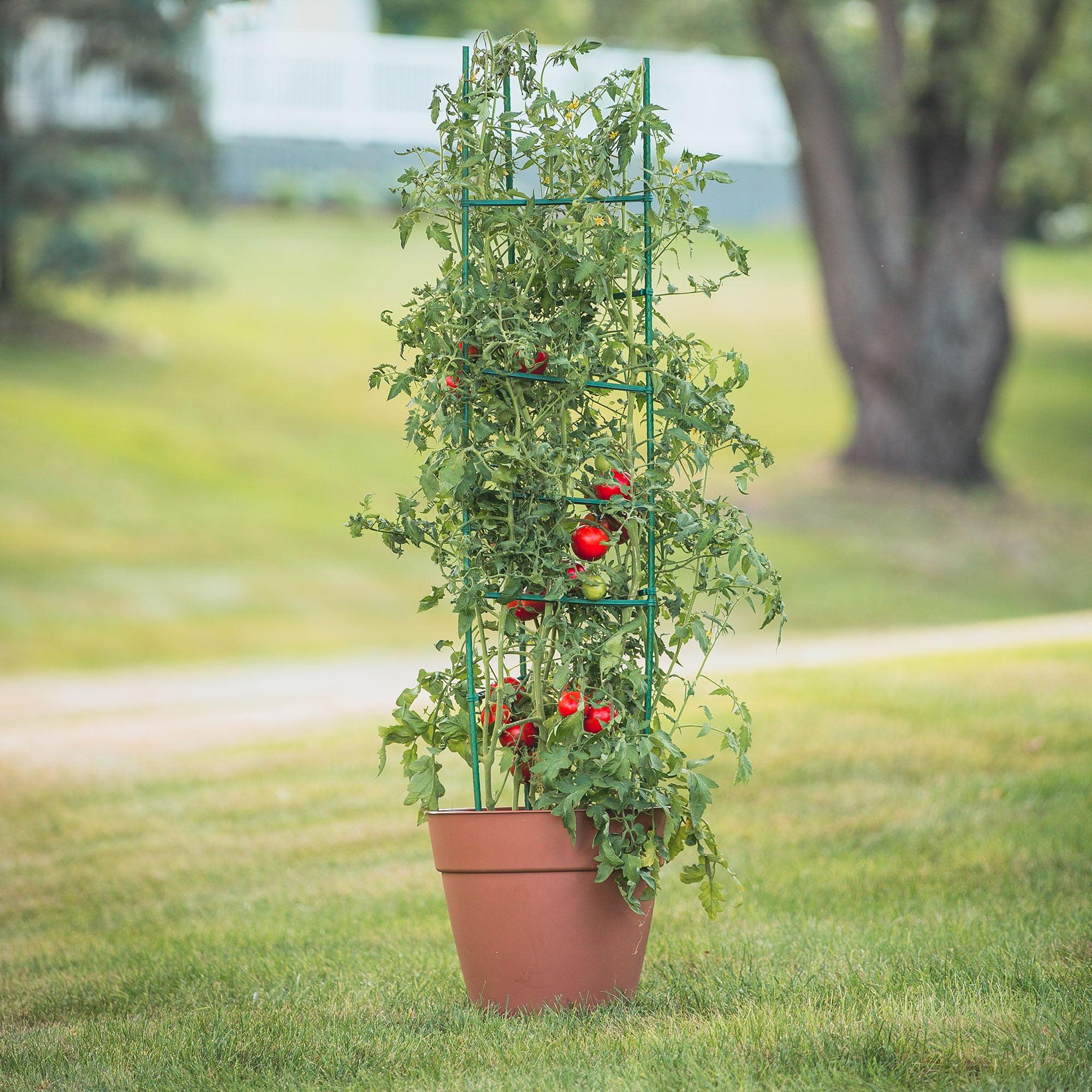 Gardner's Blue Ribbon Ultomato Tomato Plant Cage Green, TMC60
