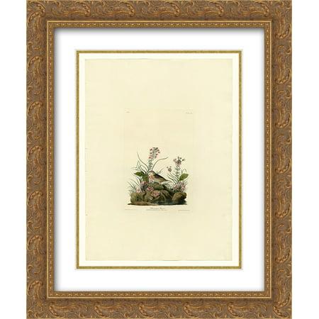 John James Audubon 2x Matted 20x24 Gold Ornate Framed Art Print 'Plate 130 Yellow-winged Sparrow'