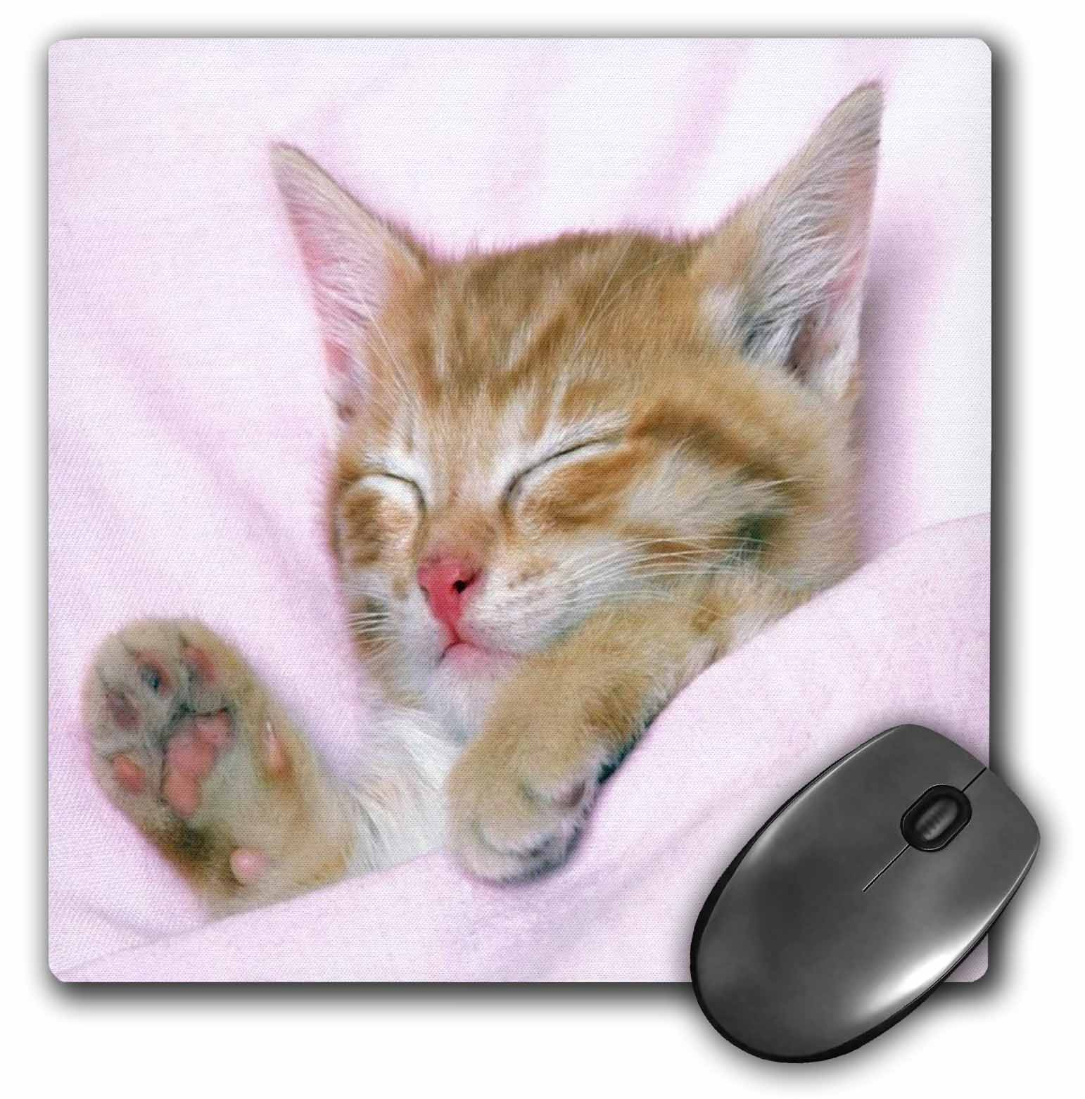 3dRose Sweetest Little Kitten All Snuggled Up, Mouse Pad, 8 by 8 inches