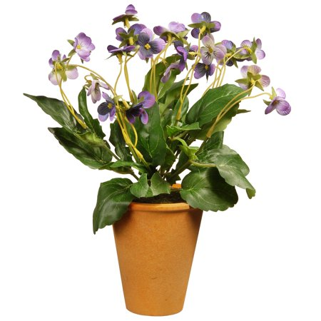 """16"""" Potted Wild Pansy Plant ()"""