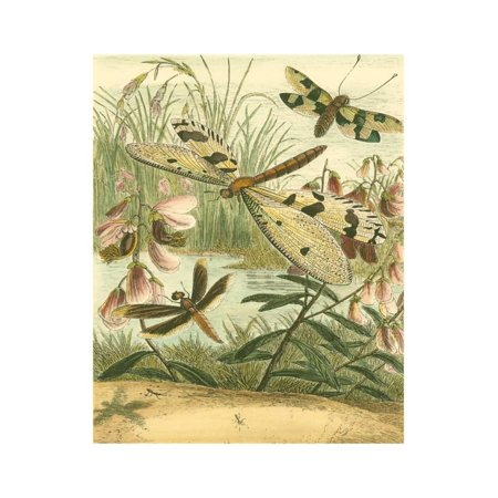 Pointillism Dragonfly Print - Dragonfly Gathering I Print Wall Art