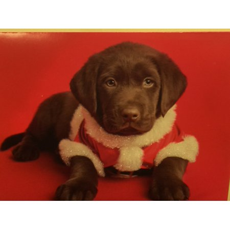 Trimmerry Chocolate Lab Puppy Christmas Cards Holiday Santa Dog ()
