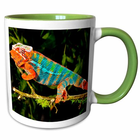 3dRose Rainbow Panther Chameleon, Lizard in Madagascar - NA02 DNO0841 - David Northcott - Two Tone Green Mug, 11-ounce