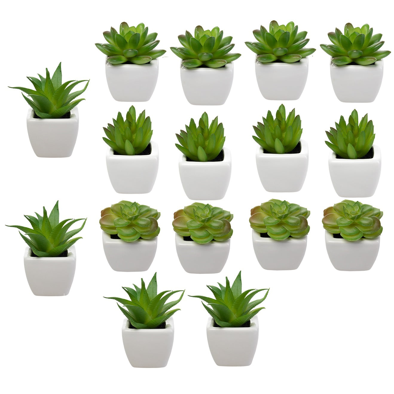3 potted Succulents 2 POTTED succulents Assorted Succulent plant Collection WEDDING FAVORS