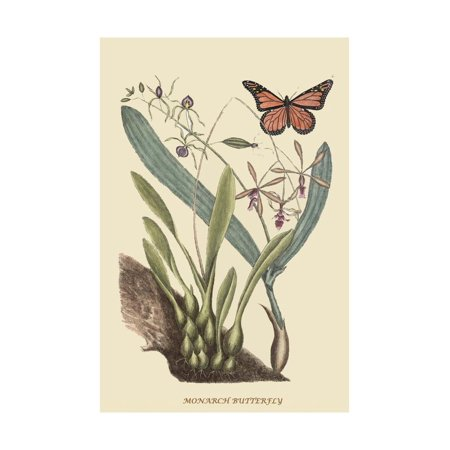 Monarch Butterfly Print Wall Art By Mark Catesby