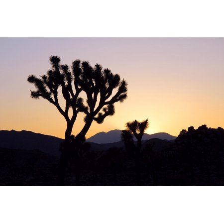 Canvas Print Landscape Mountains Joshua Tree Silhouettes Sunset Stretched Canvas 10 x 14