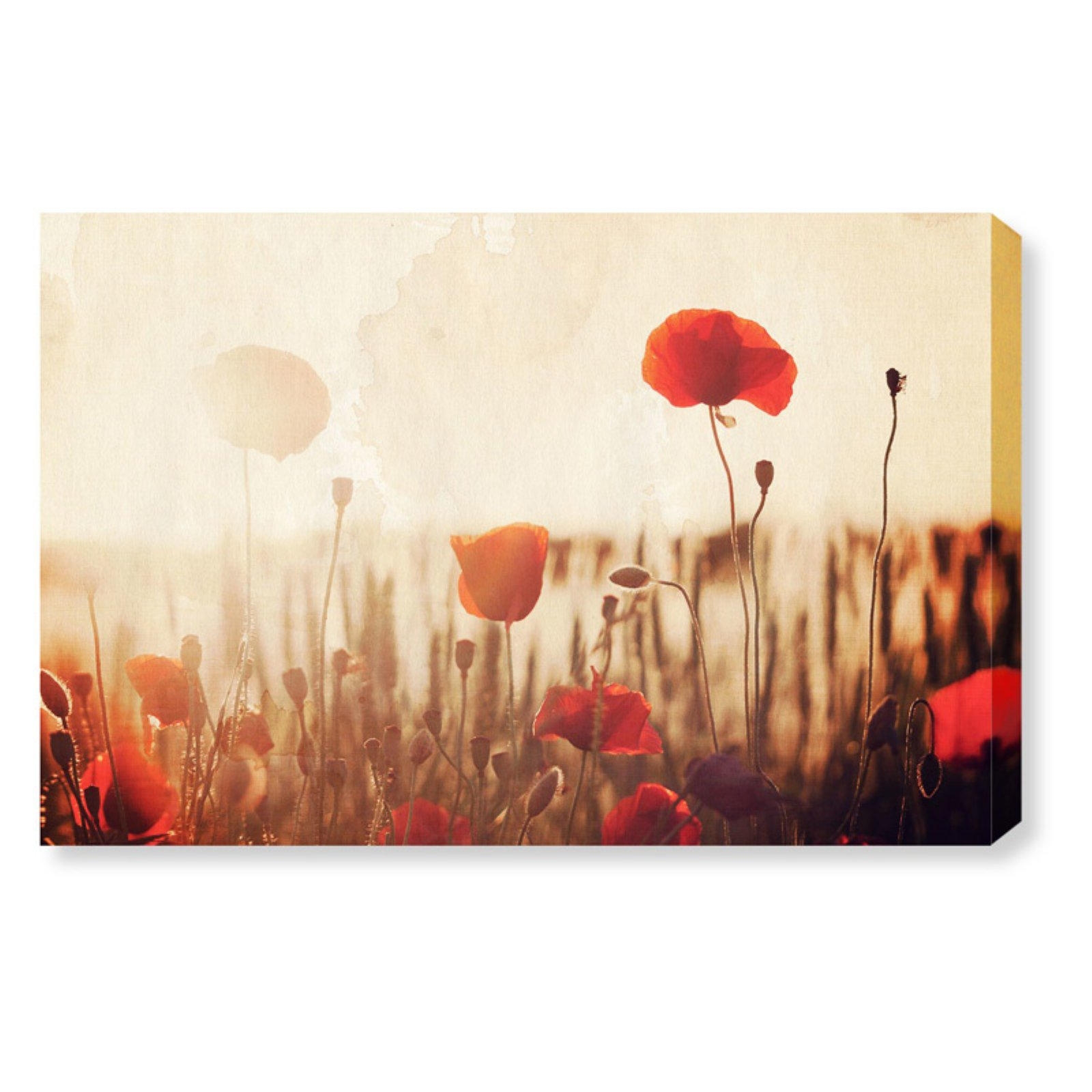 Oliver Gal 'Tulip Field' | Floral and Nature Wall Art - Red Tulips in a Flower Field | Modern Contemporary Canvas Art Print, 30x20 inch
