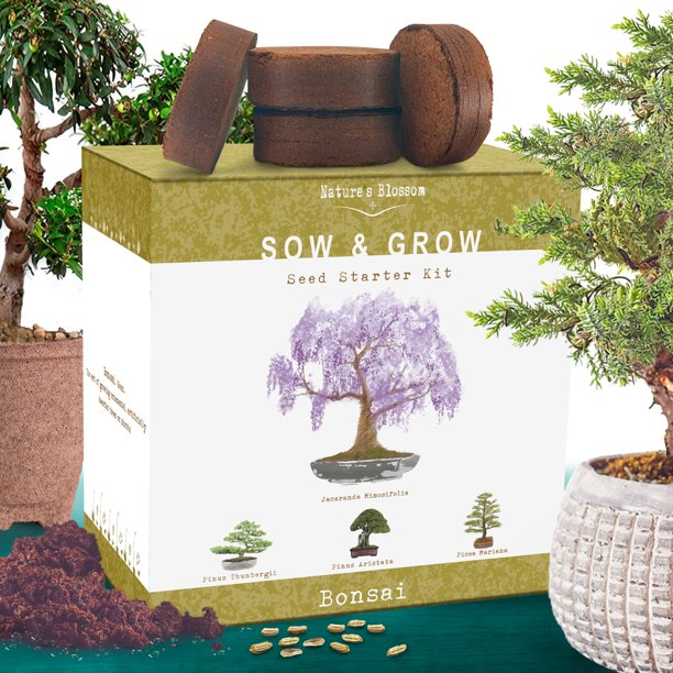 Nature S Blossom Bonsai Tree Grow Kit 4 Bonsai Trees To Grow From Seed Walmart Com Walmart Com