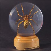 Ed Speldy East GL07 Real Bug Insect Globes-small-Spider