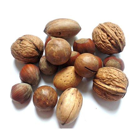 Framed Art for Your Wall Hazelnut Walnut Brazil Nuts Brazil Nut Nut Nut Mix  10x13 Frame