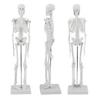 "Lv. life Anatomical Skeleton Model, Human Anatomical Lifesize Skeleton Model w/ STAND for Doctor/Student (45cm / 17.7"")"