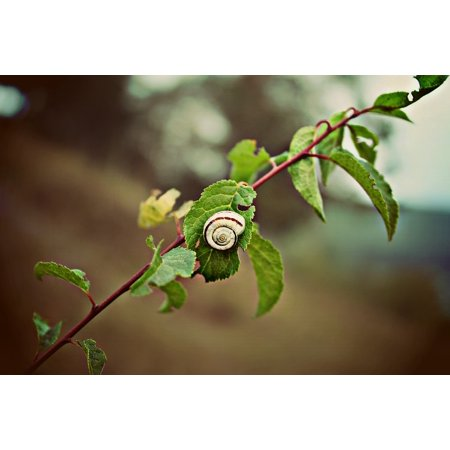 Laminated Poster Branch Tree Leaf Autumn Snail Poster Print 24 x 36