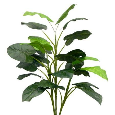 Bay Isle Home Unpotted Caladium Foliage (Caladium Bulb)