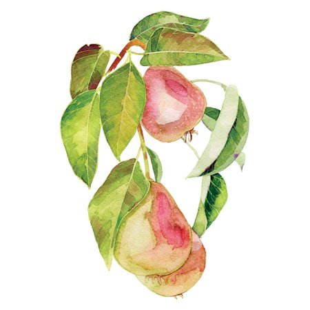 Watercolor Pears Art Fruit Kitchen Wall Shelf Square Sign Decoration Size (), 12x12