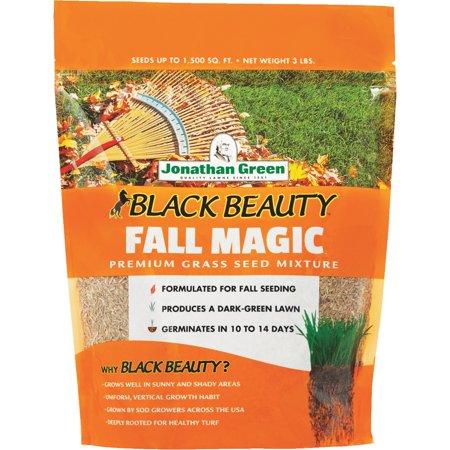 Jonathan Green Black Beauty Fall Magic Grass Seed