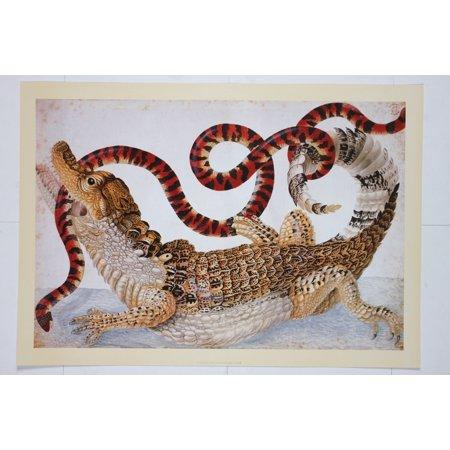 Snake & Alligator - premium Art Print of Exotic Print by Maria Sibylla Merian (13.75 x 19.75 in)