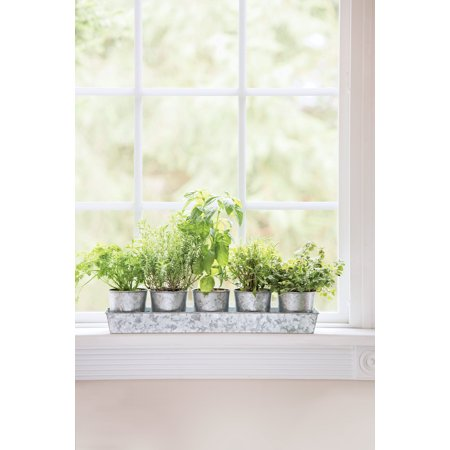 Galvanized Herb Planters with Rectangular Tray ()