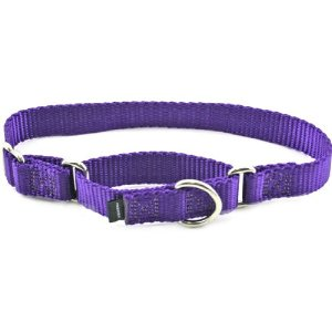 Premier Collar, Large 1-Inch, Deep Purple Multi-Colored