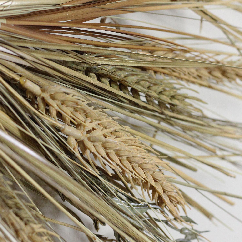 Wheat And Straw Stalks Artificial Wreath Brown 22 Inch Walmart Com Walmart Com