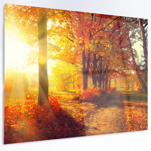 Design Art 'Autumnal Trees in Sunrays' Photographic Print on Metal