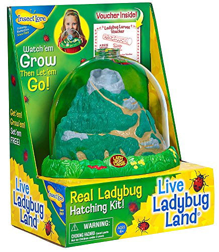 Insect Lore Ladybug Growing Kit Toy Includes Voucher Coupon for Baby Ladybug Larave to Adult Ladybugs SHIP... by Insect Lore