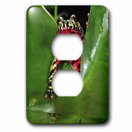 3dRose Fire Belly Toad, Native to China - NA02 DNO0112 - David Northcott - 2 Plug Outlet Cover (lsp_83808_6) (Fire Bellied Toad)
