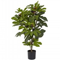 32 in. Fig Tree With 42 Leaves & 15 Figs