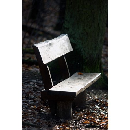 LAMINATED POSTER Bank Rest Area Bank Forest Light Nature Sunlight Poster Print 24 x