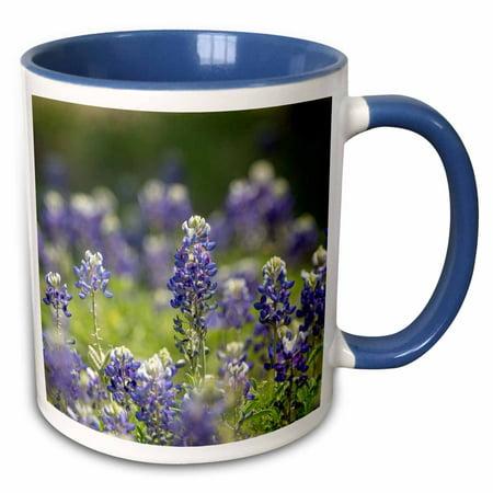 3dRose Texas bluebonnets, Austin, Texas - Two Tone Blue Mug, 11-ounce](Halloween Stores Austin Texas)