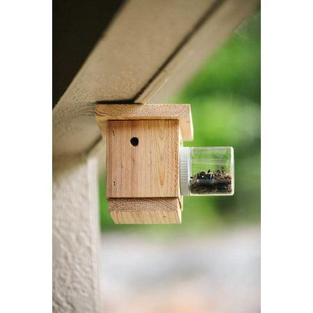 Bees N Things Carpenter Bee Trap